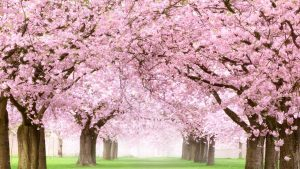 Meditation Mondays:  Monday, April 26, 2021